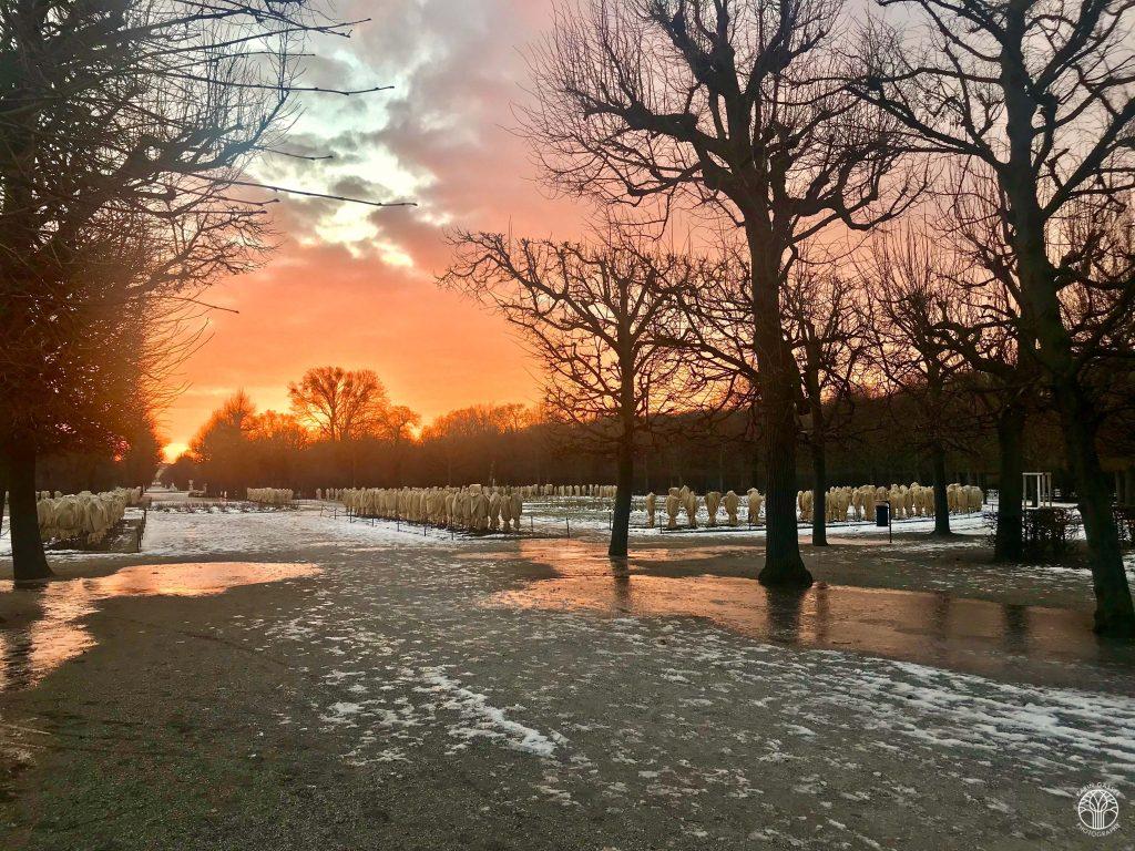 Schönbrunn Sonnenaufgang im Januar 2019 (9807)