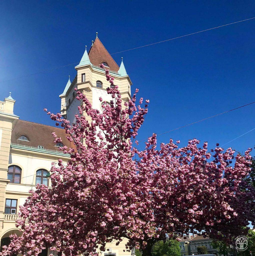 Rathaus Hietzing (9078)